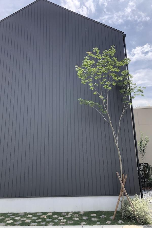 黒ガルバの家に樹々を添える